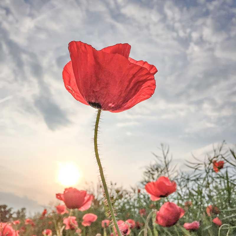017-Lone-Bjorn-Flowers-1st