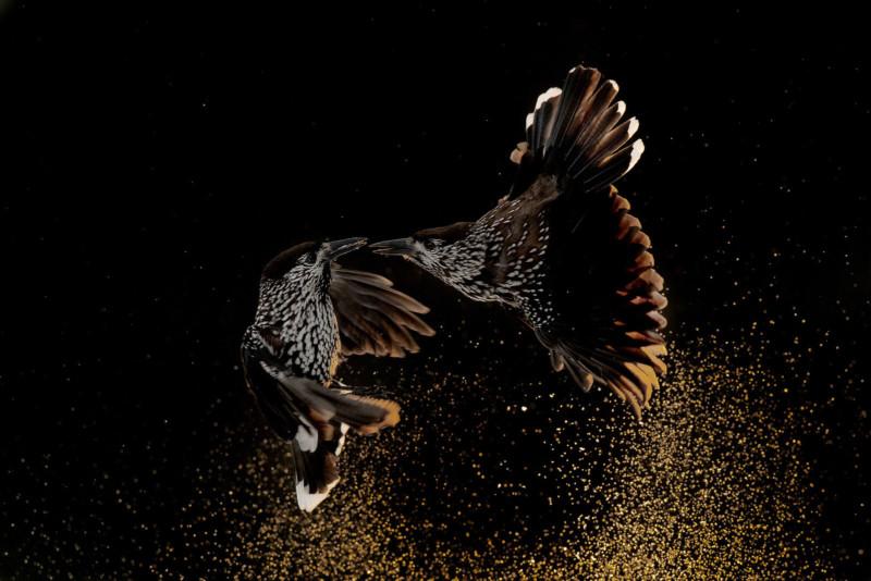 Roelof-Molenaar-Bird-behaviour-Gold-Medal