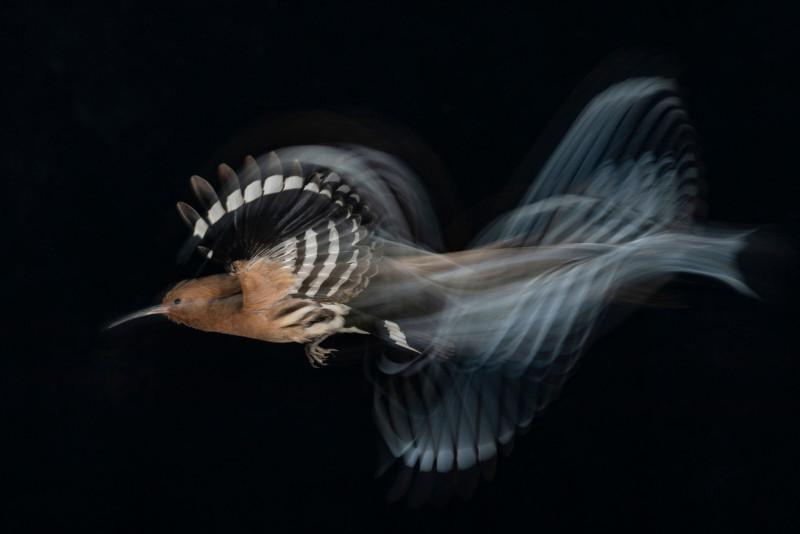 Gadi-Shmila-Birds-in-Flight-Gold-medal