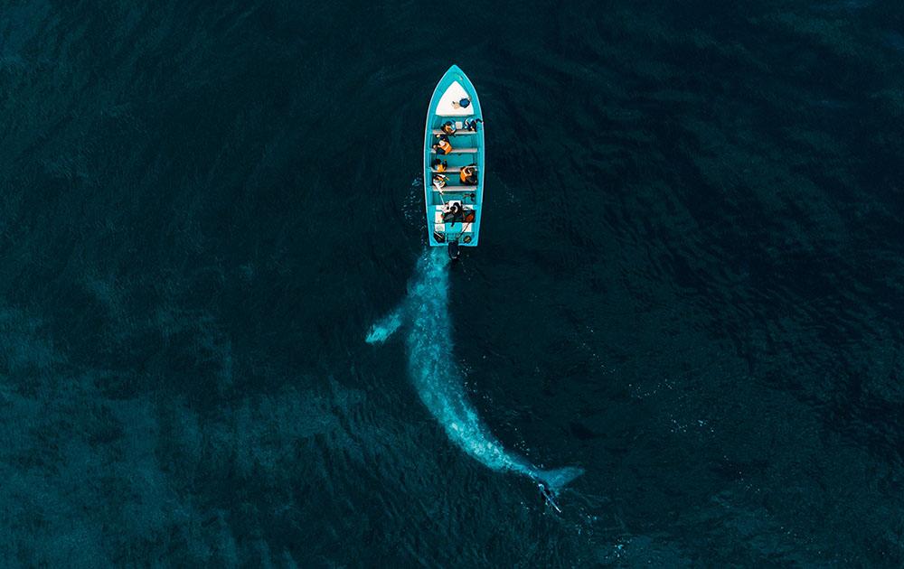 drone-photo-awards-2020-categoria-nature- joseph-cheires