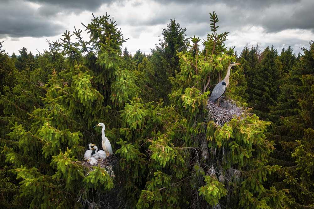 drone-photo-awards-2020-categoria-wildlife-dmitrii-viliunov