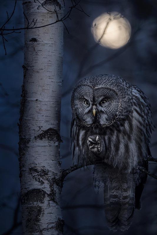 animals-in-their-environment-night-hunter-by-jonas-classon