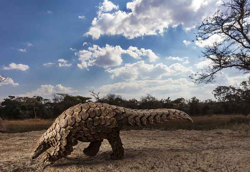 pangolins-in-crisis-by-brent-stirton