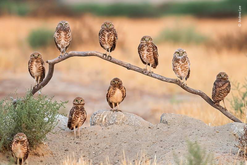 andrew-lee-wildlife-photographer-of-the-year/