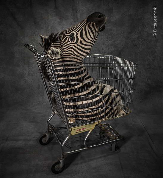 britta-jaschinski-wildlife-photographer-of-the-year/