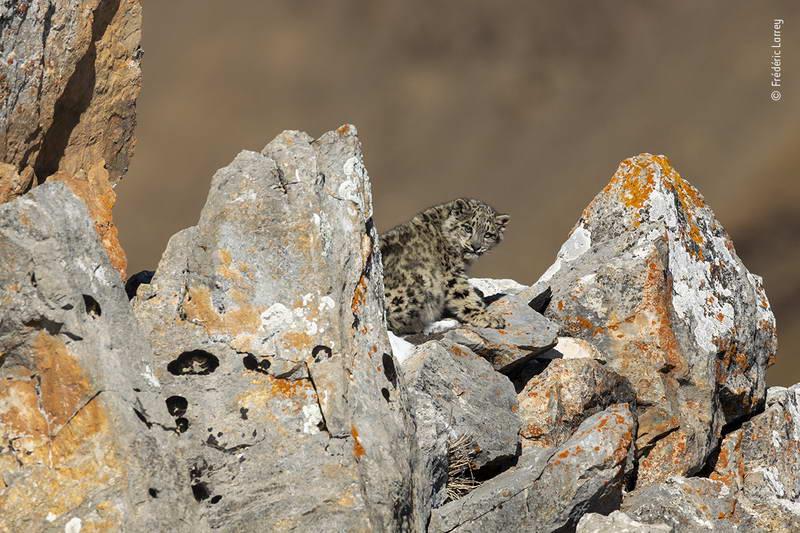 frederic-larrey-wildlife-photographer-of-the-year/