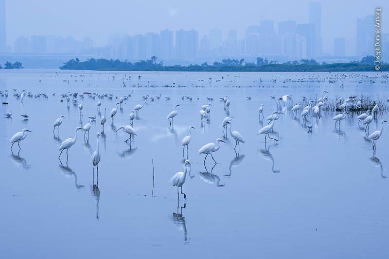 joseph-dominic-anthony-wildlife-photographer-of-the-year