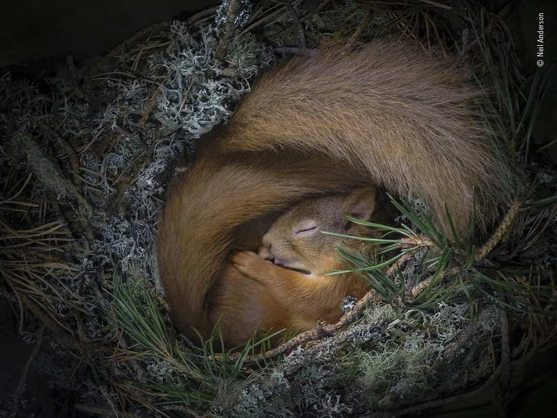 neil-anderson-wildlife-photographer-of-the-year
