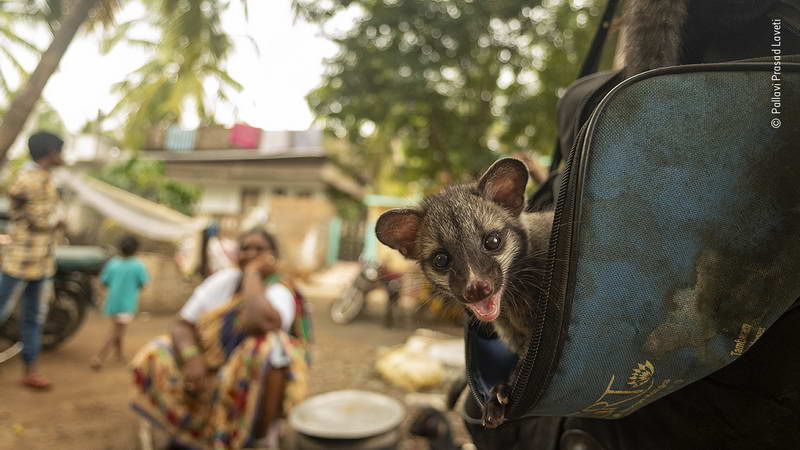 pallavi-prasad-laveti-wildlife-photographer-of-the-year/