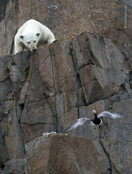 petri-pietilainen-wildlife-photographer-of-the-year/