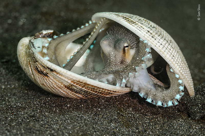 sam-sloss-wildlife-photographer-of-the-year