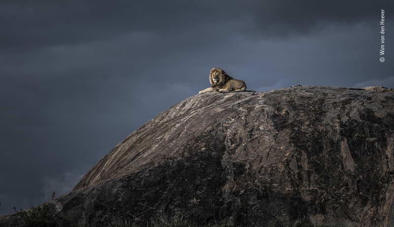 wim-van-den-heever-wildlife-photographer-of-the-year