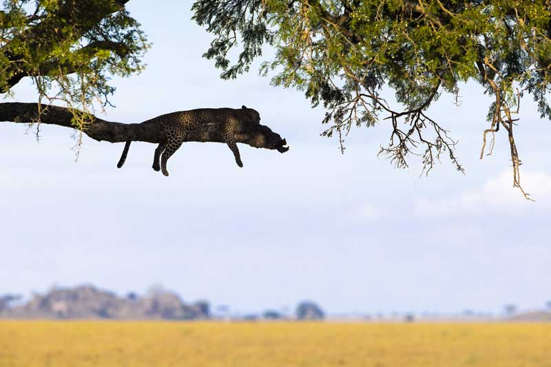 11-©-Wildlife-photographer-and-Canon-Ambassador-Maxime-Aliaga