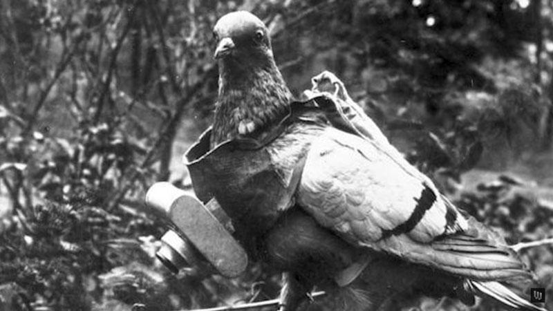 spy-camera-piccione-viaggiatore