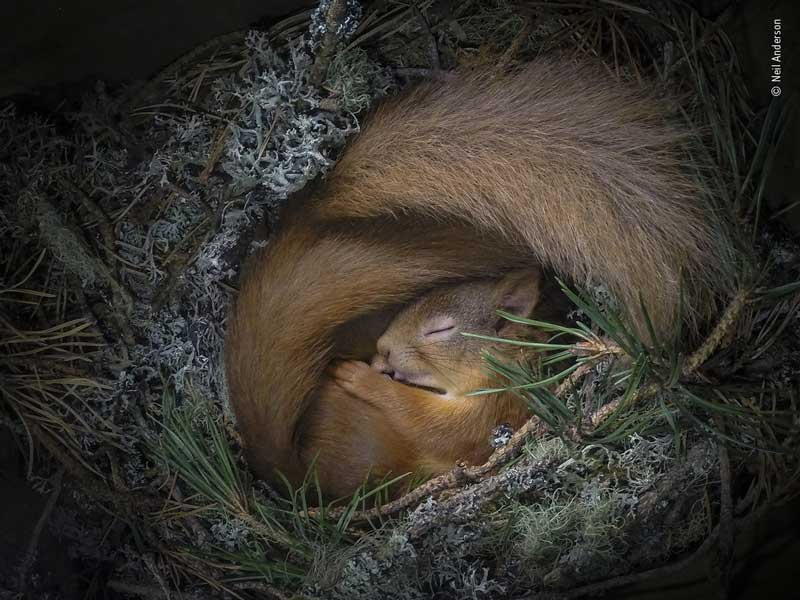 neil-anderson-wildlife-photographer-of-the-year-people-choice