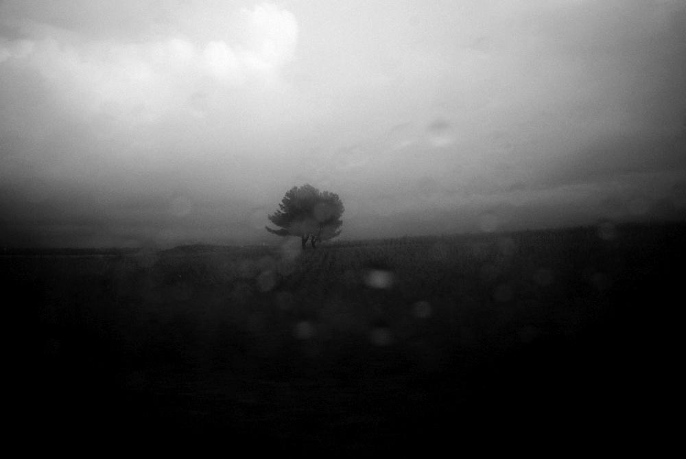 patrizia-galia-intervista-bianconero-sicilia-albero-solitario-sotto-il-temporale