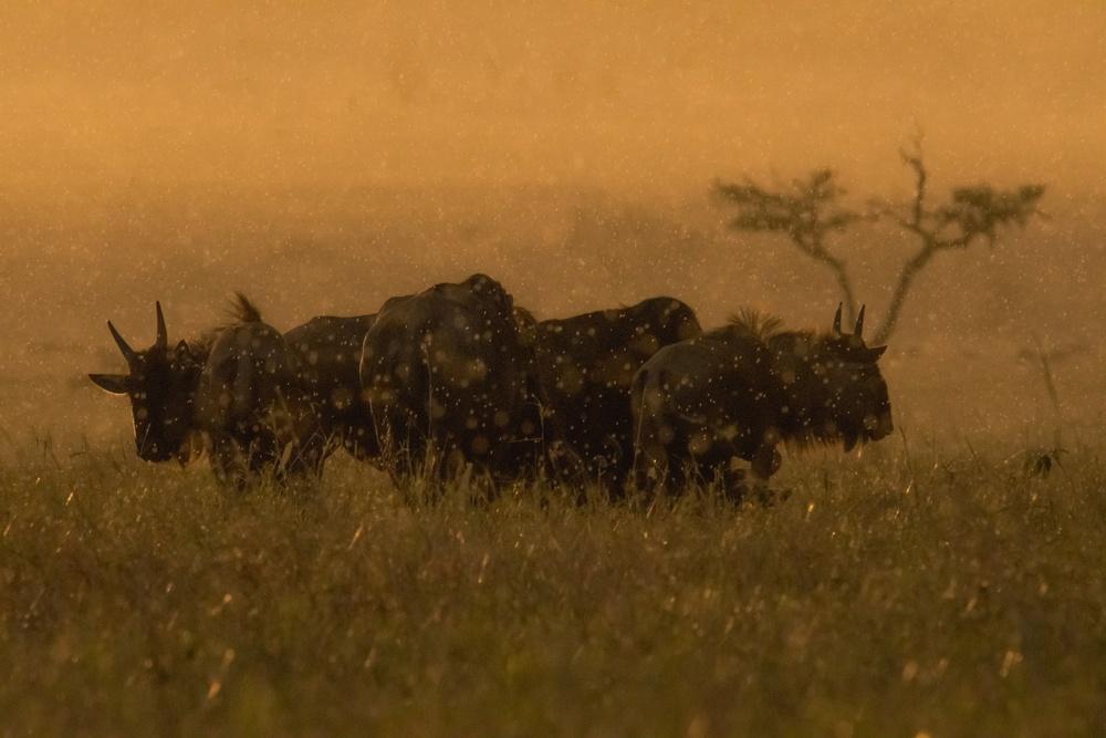 3◦ Premio Natura Marinsek Sonja ( Monrupino TS ) GNU, SAVANA, TANZANIA