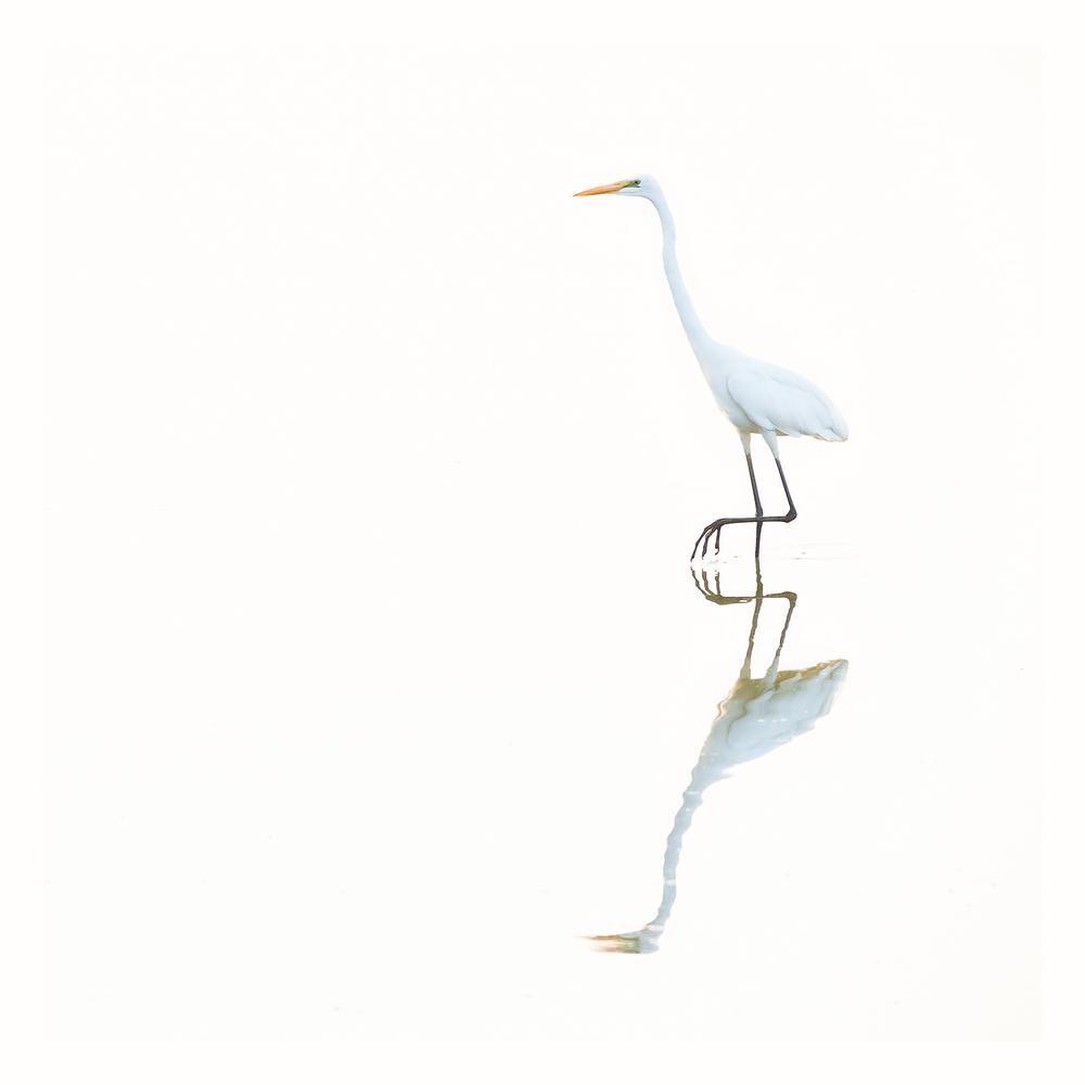 intervista-a-franco-fratini-naturalista-avifauna-macro
