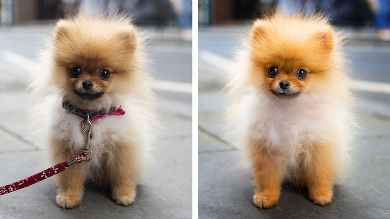 PSE-Perfect-Pet-Pics